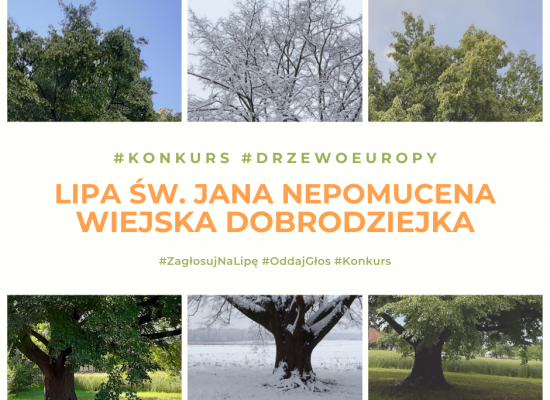 Głosujemy na Europejskie Drzewo Roku 2021