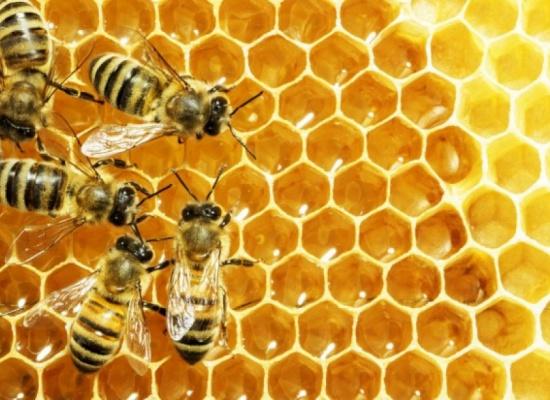 """""""Program poprawy warunków fitosanitarnych rodzin pszczelich poprzez wsparcie zakupu pokarmów pszczelich""""."""